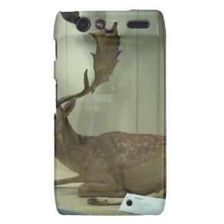Fallow deer (Dama dama) Droid RAZR Cover
