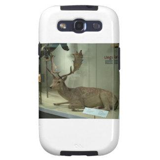 Fallow deer (Dama dama) Samsung Galaxy S3 Cover
