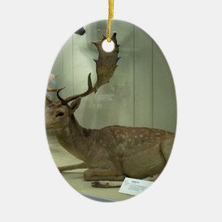 Fallow deer (Dama dama) Ceramic Oval Ornament