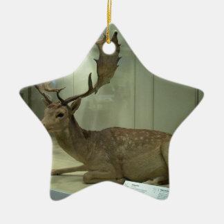 Fallow deer (Dama dama) Ceramic Star Ornament