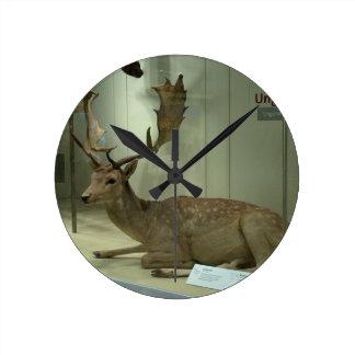 Fallow deer (Dama dama) Wall Clock