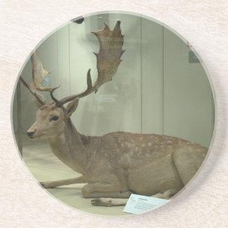 Fallow deer (Dama dama) Beverage Coasters