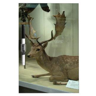 Fallow deer (Dama dama) Dry-Erase Board