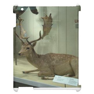 Fallow deer (Dama dama) iPad Covers