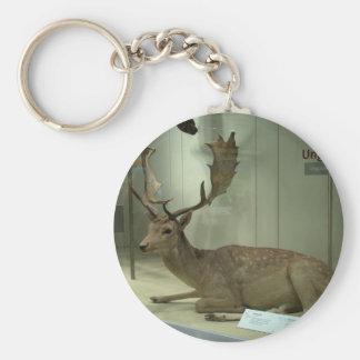 Fallow deer (Dama dama) Key Chain