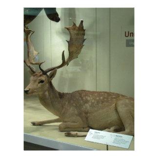 Fallow deer (Dama dama) Letterhead