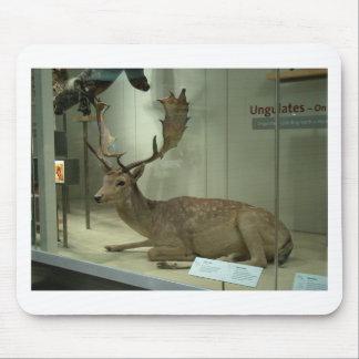 Fallow deer (Dama dama) Mouse Pad