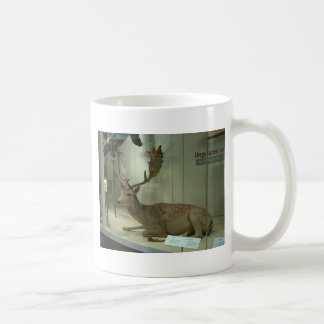 Fallow deer (Dama dama) Coffee Mug