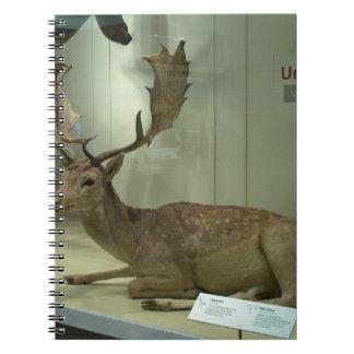 Fallow deer (Dama dama) Notebooks