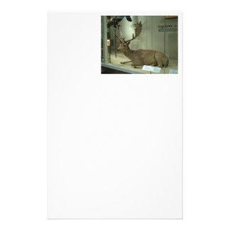 Fallow deer (Dama dama) Stationery