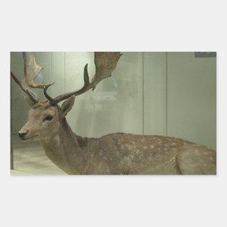 Fallow deer (Dama dama) Sticker