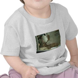 Fallow deer (Dama dama) T Shirts