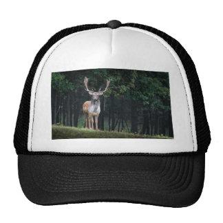 fallow trucker hat