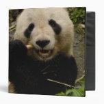Famille de melanoleuca d'Ailuropoda de panda géant