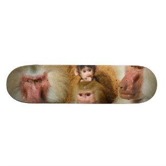 Famille de zoo de Hamadryas Cologne de Papio de ba Skateboard 19,7 Cm