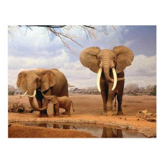Famille d'éléphant carte postale