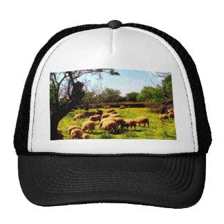 Family love peace joy idyll sheep flock trucker hats