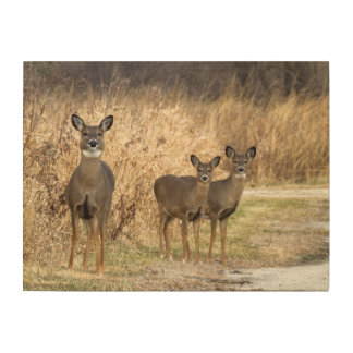 Family of Deer in the Woods Wood Wall Decor