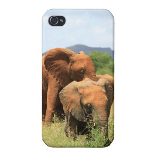 Family of elephants iPhone 4 cover