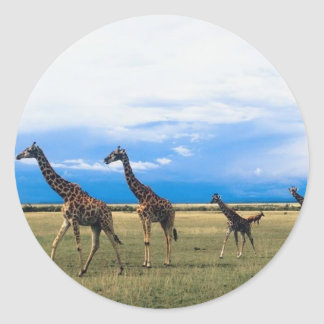 Family of Giraffes Round Sticker