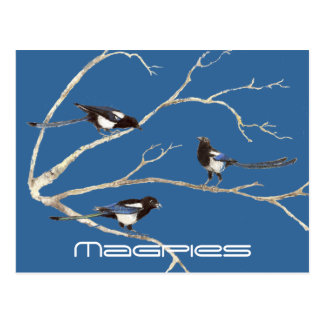 Family of Magpies, Birds, Nature, Wildlife Postcard