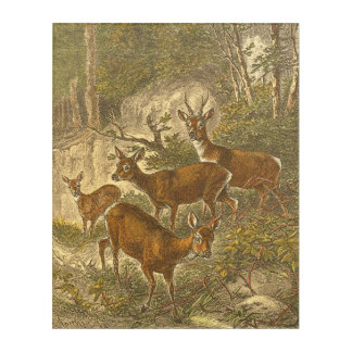 Family of Roe - Deers in a Forest Acrylic Print