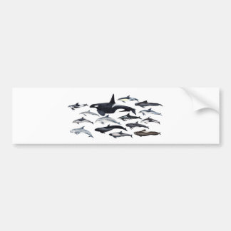 Family of the dolphins: orcas, dolphins, marsopas bumper sticker