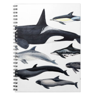 Family of the dolphins: orcas, dolphins, marsopas notebook