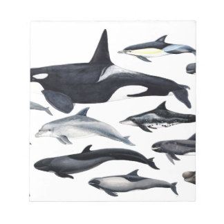 Family of the dolphins: orcas, dolphins, marsopas notepad