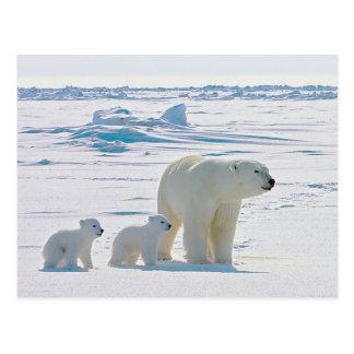 Family Polar Bear Postcards