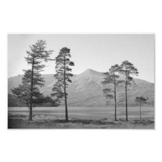 Family Tree Photo Print