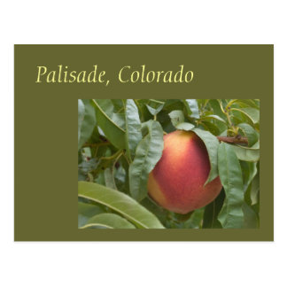 Famous Palisade Peach on the Tree Postcard