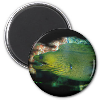 Famouse Green Moray Eel Magnet