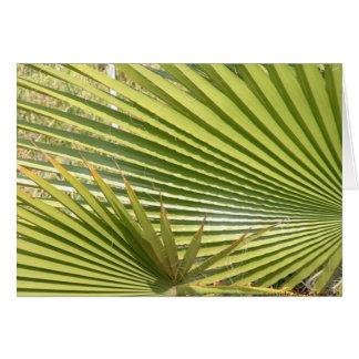 Fan palms card