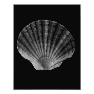 Fan Shell Photographic Print