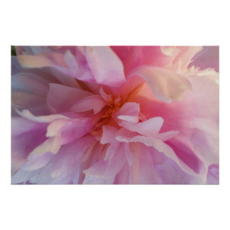 Fanciful Peachy-Pink Peony: Large Format Print