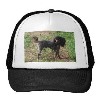 Fancy Black Prancing Poodle Trucker Hat