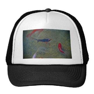 fancy gold fish trucker hat
