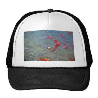 fancy gold fish hat