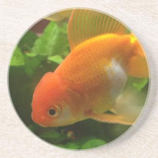 Fancy Goldfish Coaster