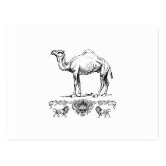 fancy lion camel postcard