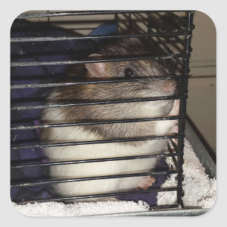 Fancy Rat on a square sticker