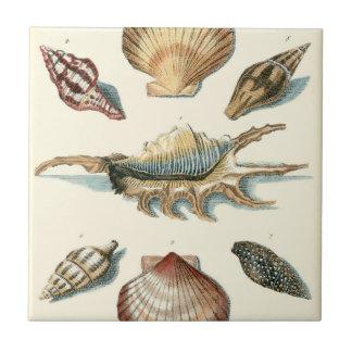 Fancy Shell Beach Tile