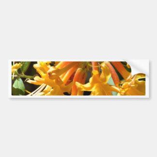 Fancy Yellow Honeysuckle Bumper Sticker