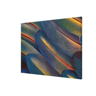 Fanned Out Scarlet Macaw Feathers Canvas Print