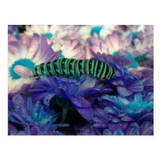 Fantasy Caterpillar Postcard