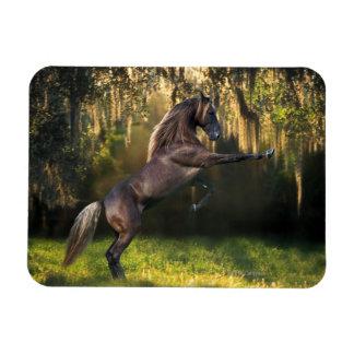 Fantasy Horses: Warrior Prince Rectangular Photo Magnet