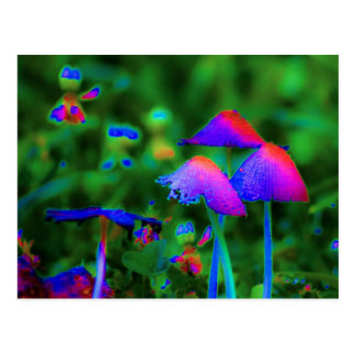 Fantasy Mushrooms Postcard