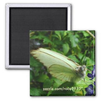 farfalla bianca magnet