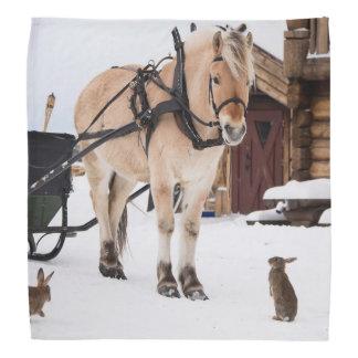 Farm animal talk horse and rabbits head kerchief